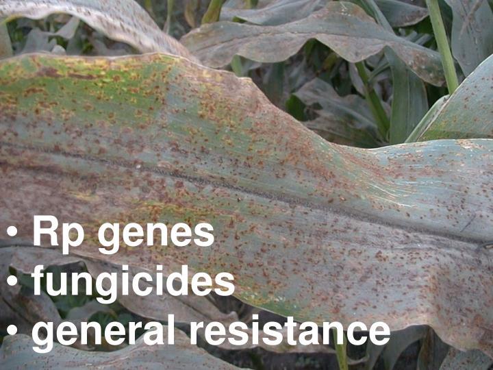 Rp genes