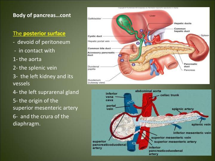 Body of pancreas…cont