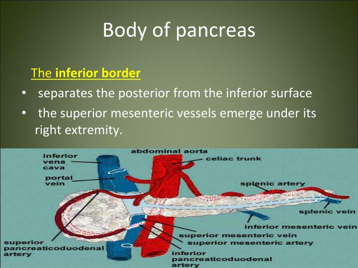 Body of pancreas