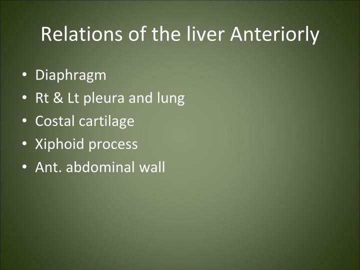 Relations of the liver Anteriorly