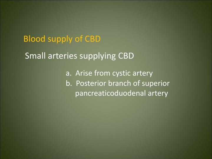 Blood supply of CBD