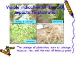 visible indication of the so 2 impacts to plantation