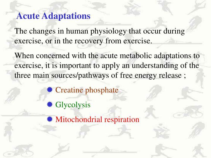Acute Adaptations