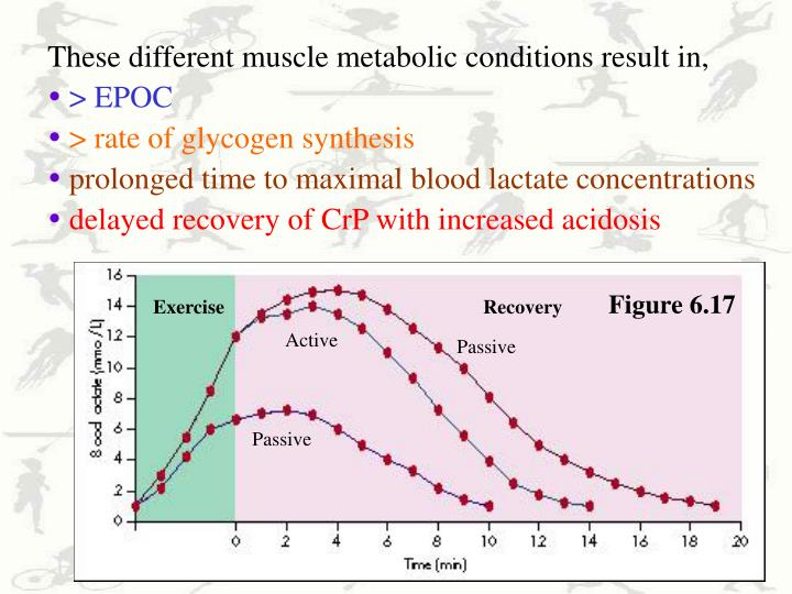 These different muscle metabolic conditions result in,