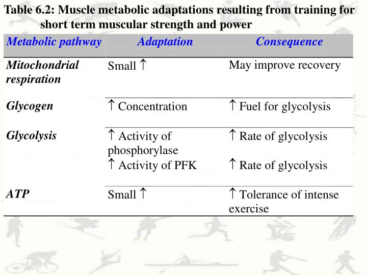Table 6.2: Muscle metabolic adaptations resulting from training for short term muscular strength and power