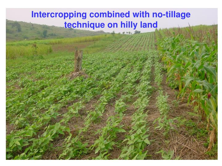Intercropping combined with no-tillage technique