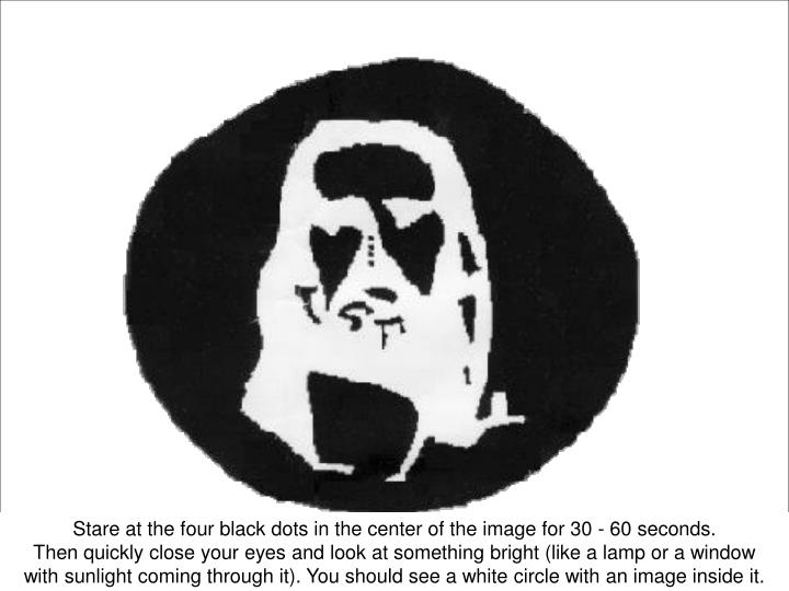 Stare at the four black dots in the center of the image for 30 - 60 seconds.