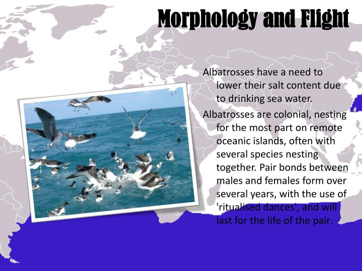 Morphology and Flight