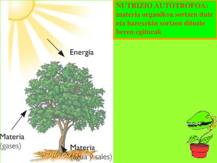 NUTRIZIO AUTOTROFOA: materia organikoa sortzen dute eta harexekin sortzen dituzte beren egiturak