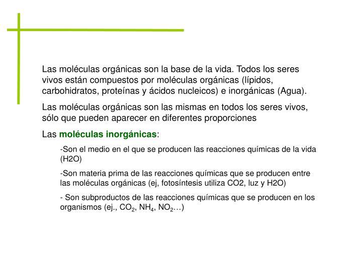 Las moléculas orgánicas son la base de la vida. Todos los seres vivos están compuestos por moléculas orgánicas (lípidos, carbohidratos, proteínas y ácidos nucleicos) e inorgánicas (Agua).