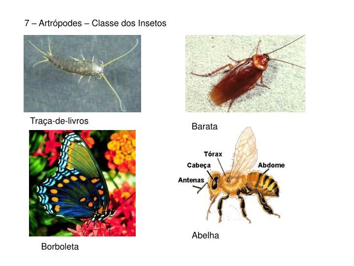 7 – Artrópodes – Classe dos Insetos