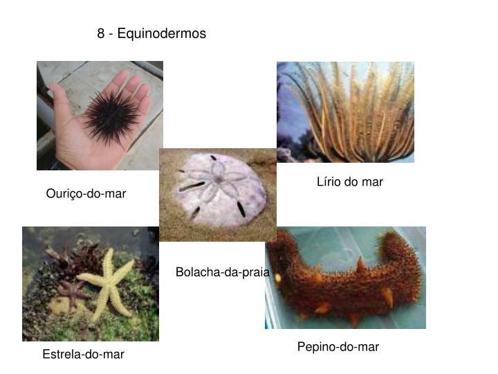 8 - Equinodermos