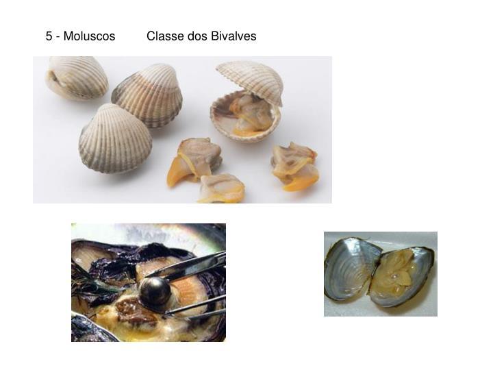 5 - Moluscos
