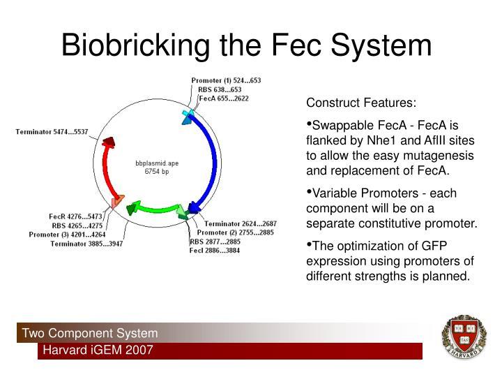 Biobricking the Fec System