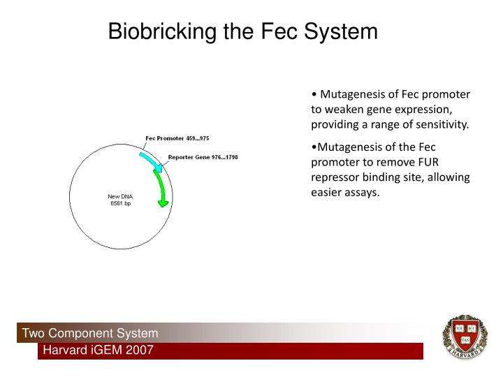 Biobricking the Fec System