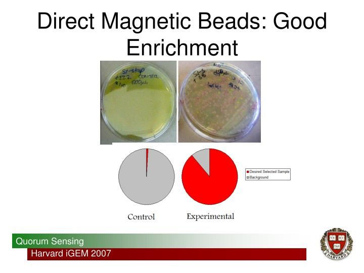 Direct Magnetic Beads: Good Enrichment