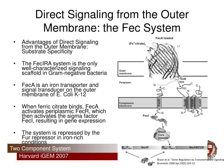 Direct Signaling from the Outer Membrane: the Fec System