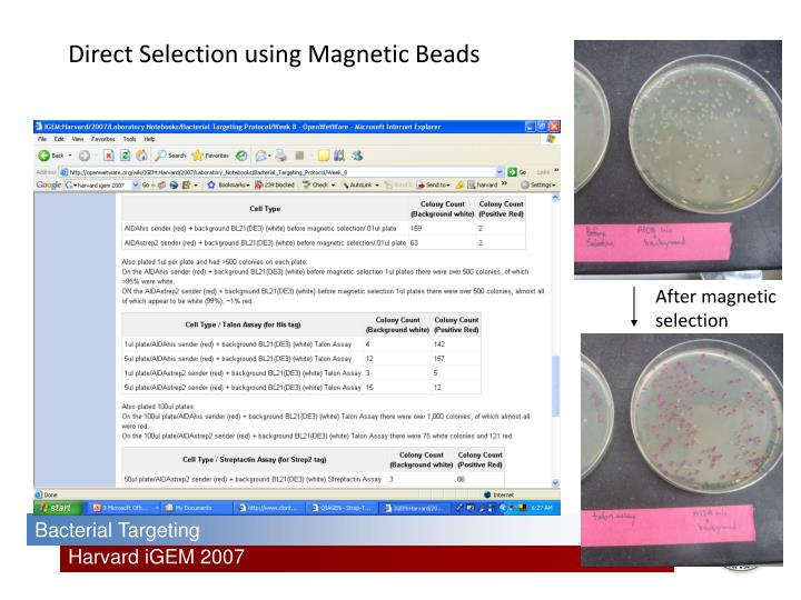 Direct Selection using Magnetic Beads