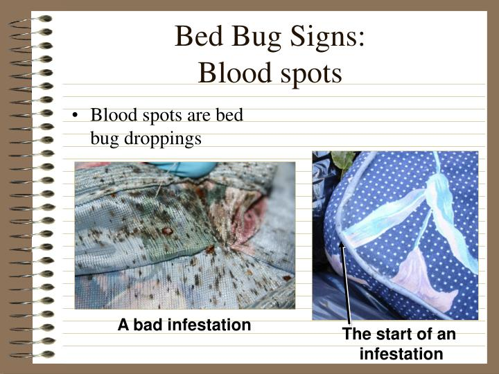 Bed bug signs blood spots