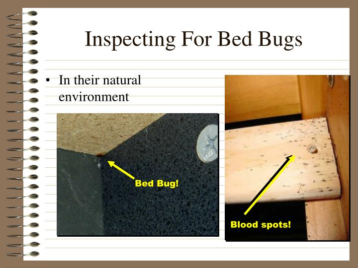 Inspecting For Bed Bugs