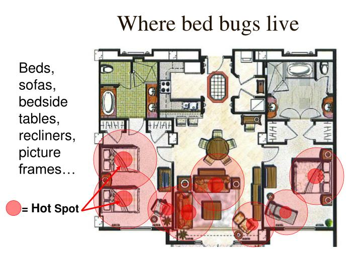 Where bed bugs live