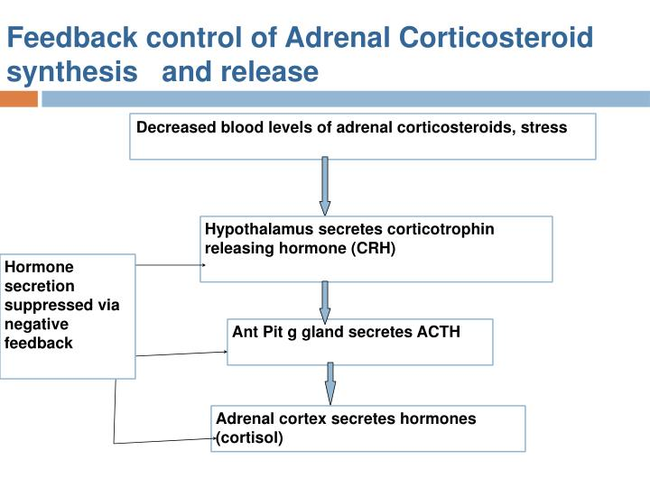 Feedback control of Adrenal Corticosteroid synthesis   and release