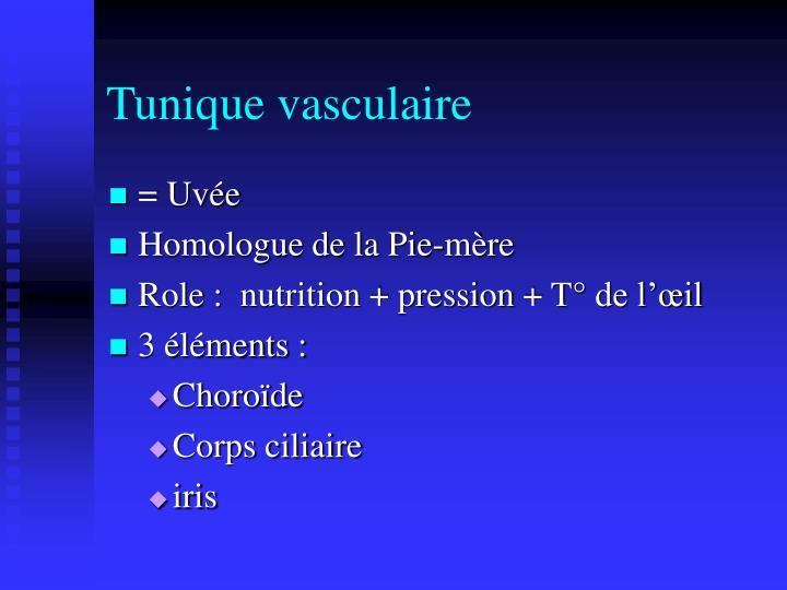 Tunique vasculaire