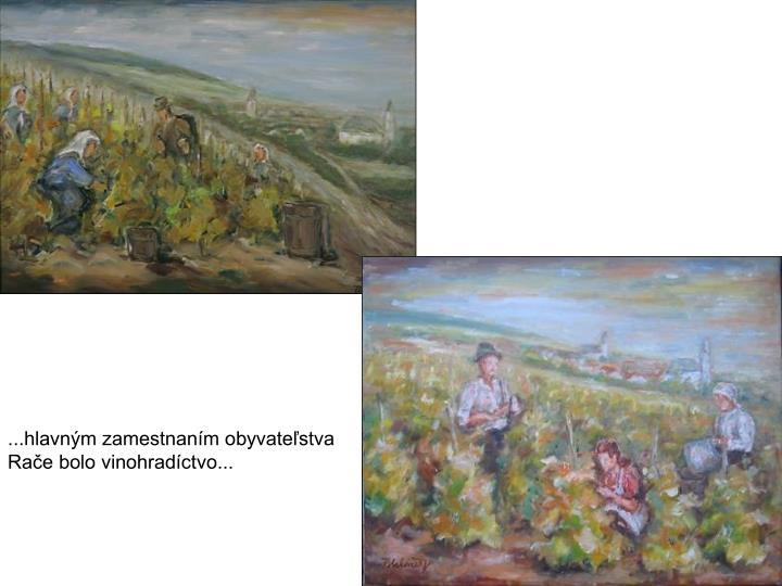 ...hlavným zamestnaním obyvateľstva Rače bolo vinohradíctvo...