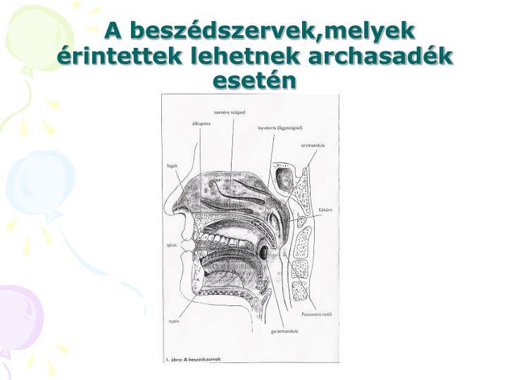 A beszédszervek,melyek érintettek lehetnek archasadék esetén