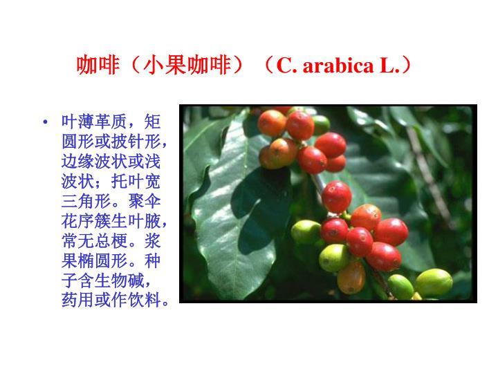 咖啡(小果咖啡)(