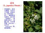 l japonica thunb