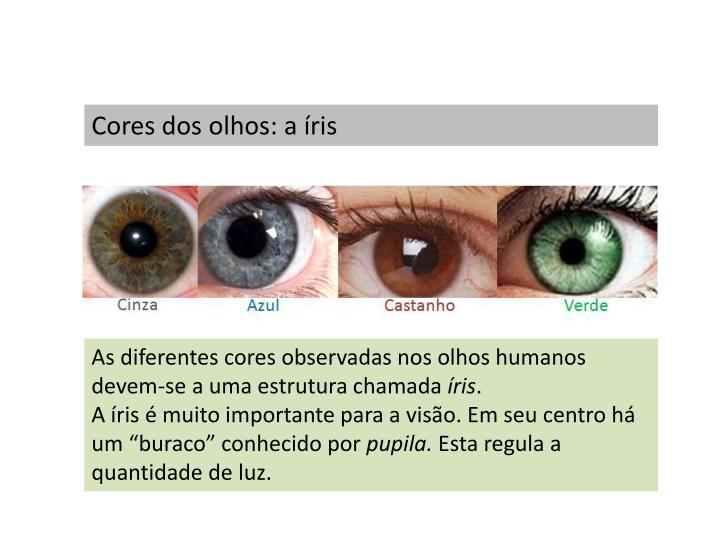 Cores dos olhos: a íris