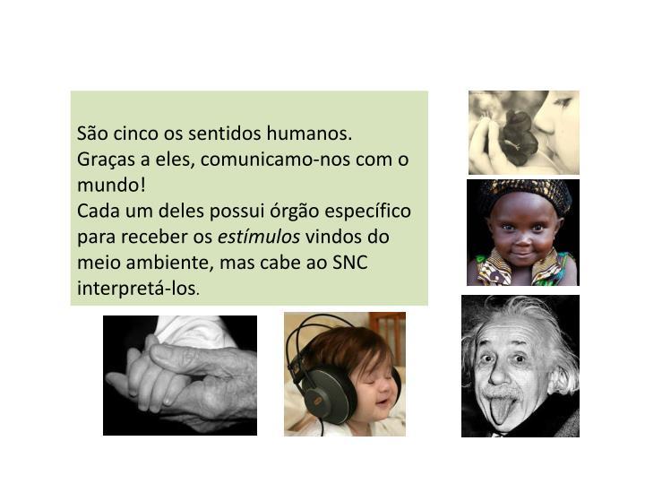 São cinco os sentidos humanos.