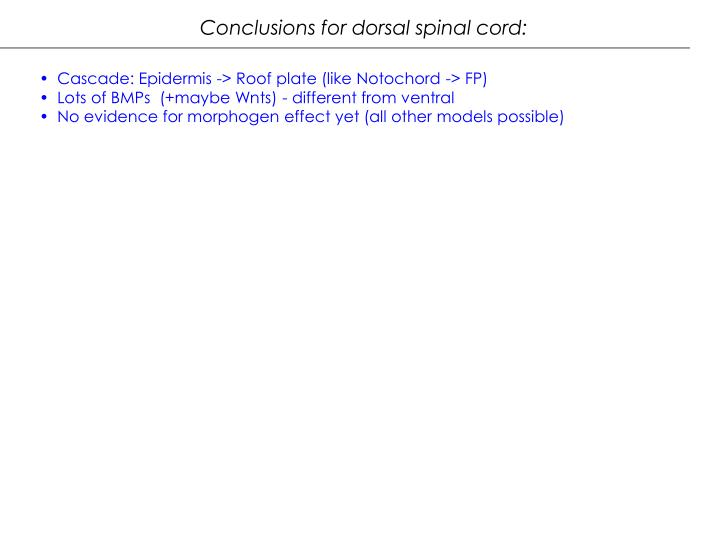 Conclusions for dorsal spinal cord: