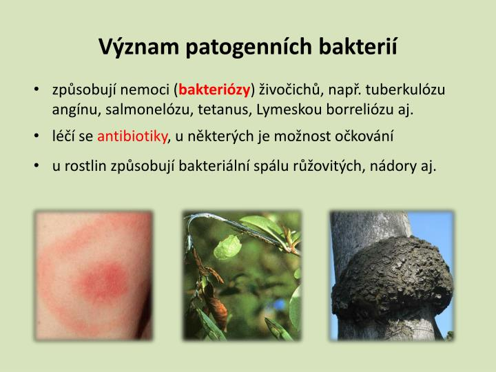 Význam patogenních bakterií