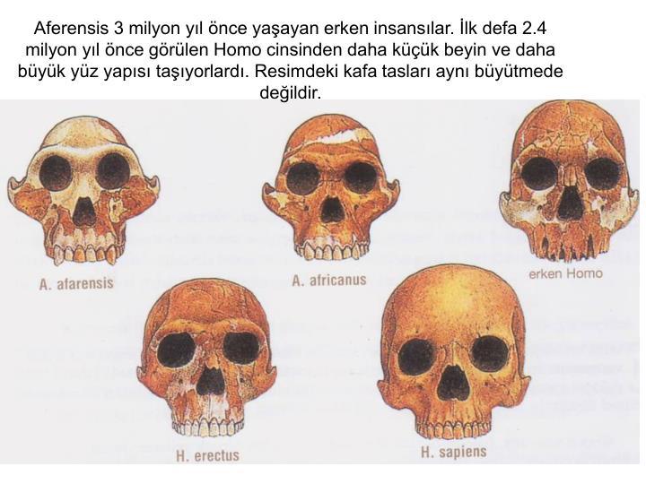 Aferensis 3 milyon yıl önce yaşayan erken insansılar. İlk defa 2.4 milyon yıl önce görülen Homo cinsinden daha küçük beyin ve daha büyük yüz yapısı taşıyorlardı. Resimdeki kafa tasları aynı büyütmede değildir.