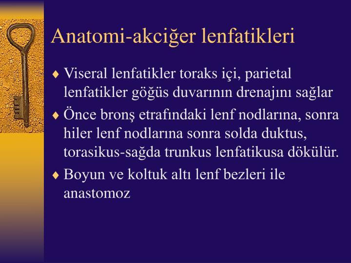 Anatomi-akciğer lenfatikleri