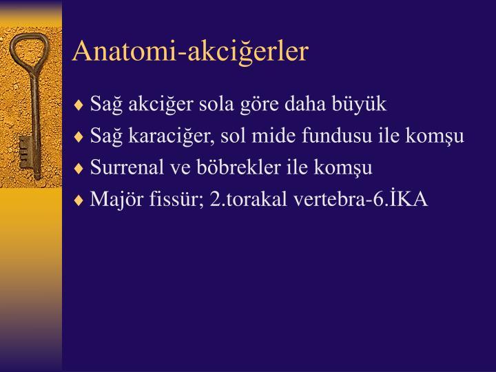 Anatomi-akciğerler