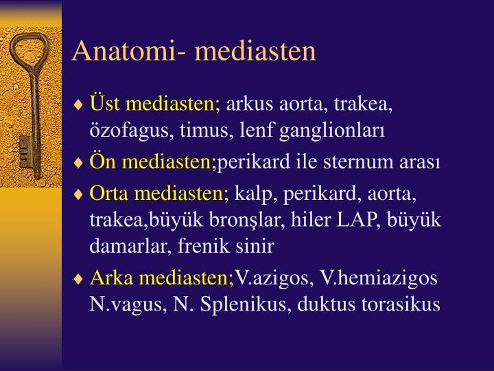 Anatomi- mediasten