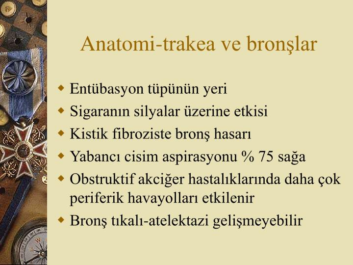 Anatomi-trakea ve bronşlar