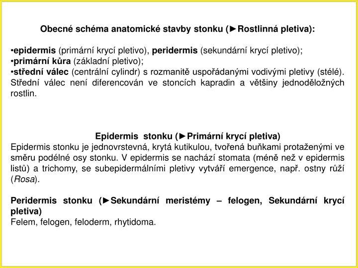 Obecn schma anatomick stavby stonku (Rostlinn pletiva):