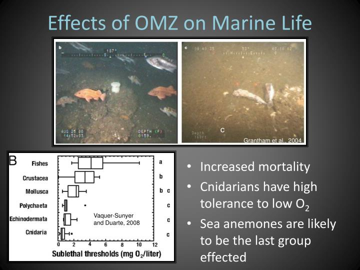 Effects of OMZ on Marine Life