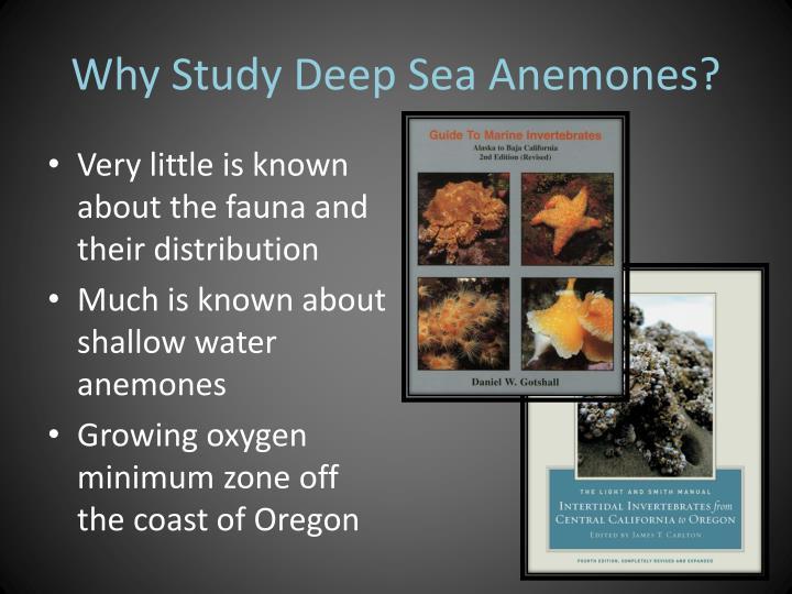 Why Study Deep Sea Anemones?