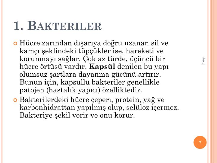 1. Bakteriler