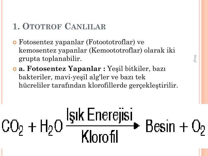 1. Ototrof Canllar