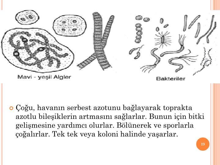 2. MAV  YEL ALGLER