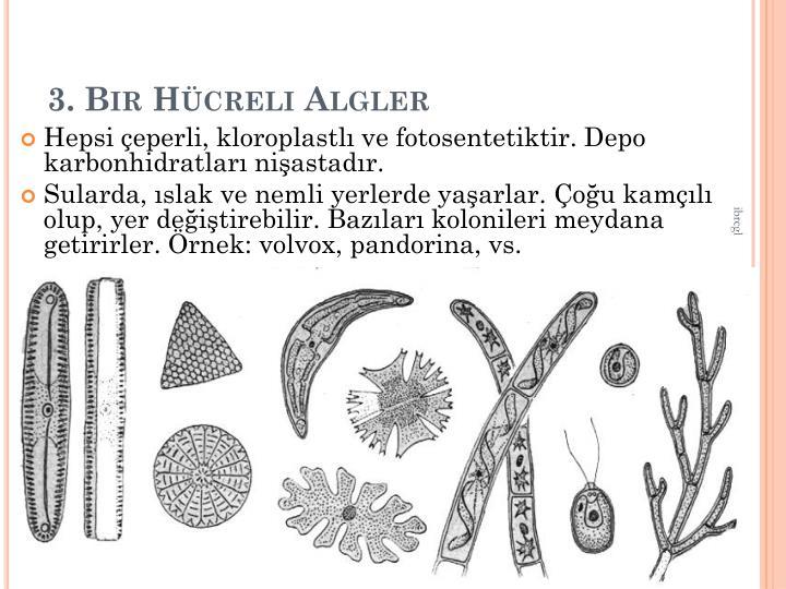 3. Bir Hcreli Algler