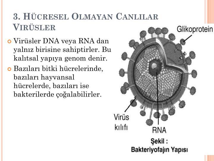 3. Hcresel Olmayan Canllar Virsler