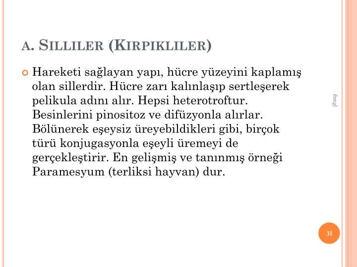 a. Silliler (Kirpikliler)