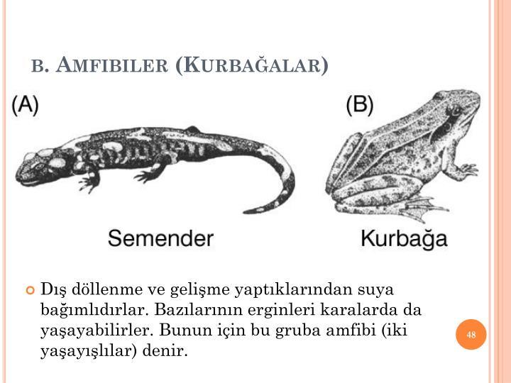 b. Amfibiler (Kurbaalar)